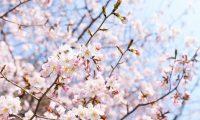 【OFSP】春一番CUP 開催!!